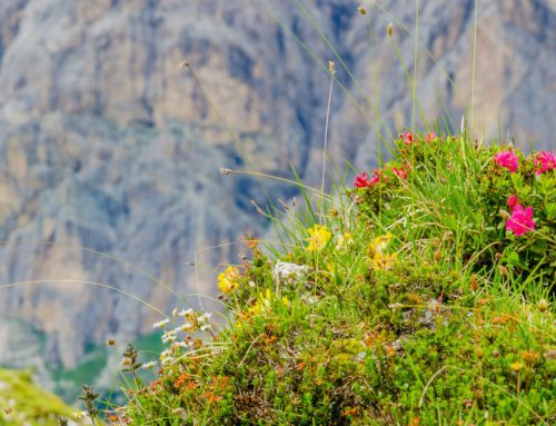 I posti migliori dove fare trekking a Cortina